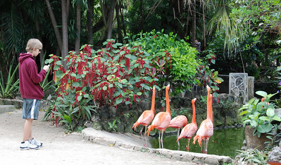 Jeremy lines up with the flamingos.