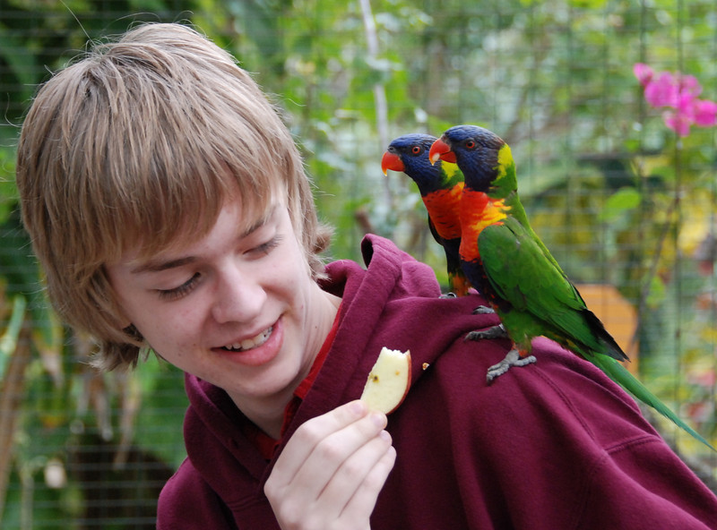 Jeremy feeds the parrots.