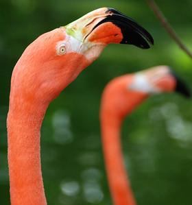 Bahamas trip: Ardastra Gardens