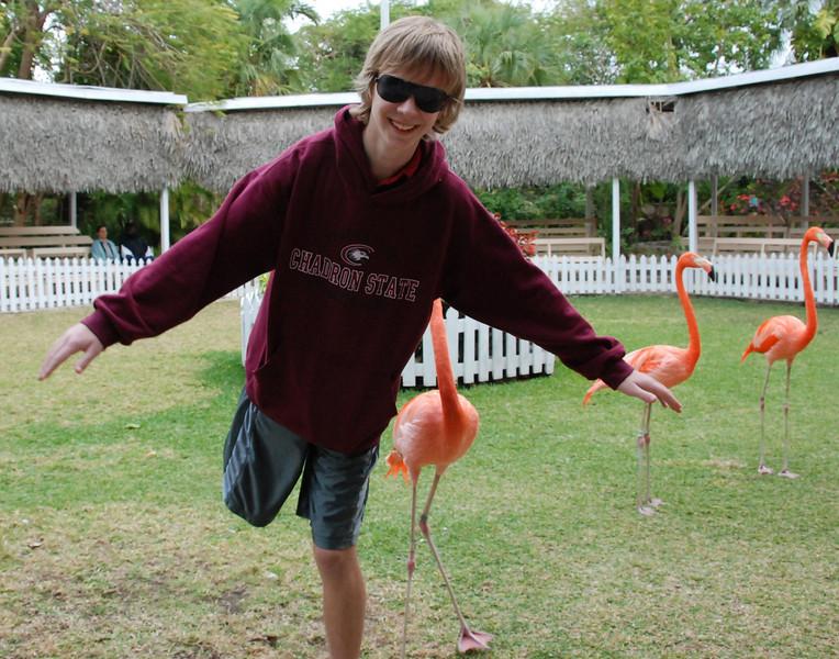 Jeremy flamingo