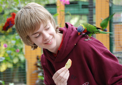 Jeremy feeds the parrots. Visitors could go inside this cage 3 different times during the day and feed apples to the parrots. They were very friendly and landed on your hands, shoulders and head to eat.