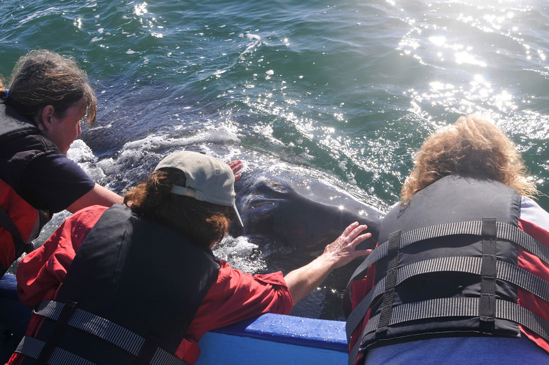 Liz, Joanne and Chris...and the baby Gray Whale