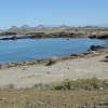 Isla San Benito, Baja California Elephant Seal Haulout