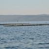 Farm fishing traps and nets off Ensenada