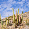 Isla Catalina, Baja California  Home to the largest Cactus