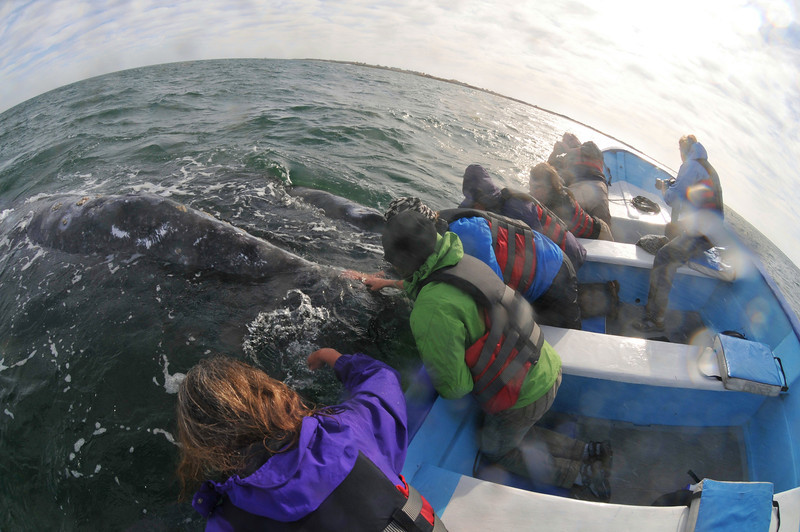 Our Whale Watching panga in San Ignacio.   We use local fisherman there to go see the Gray Whales