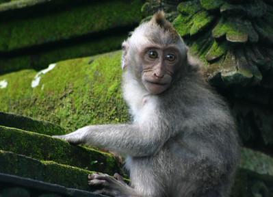 Ubud (Bali 2010)