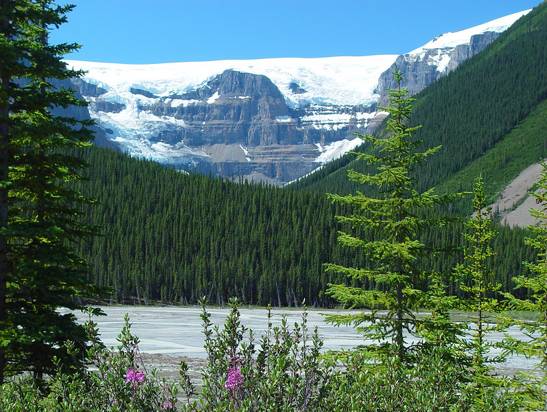 Along the road near Columbia Icefields