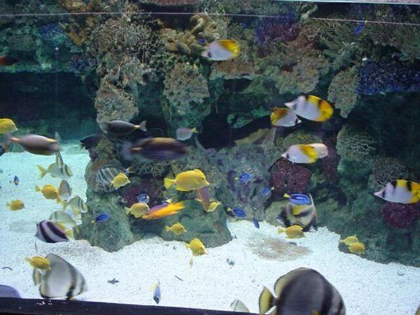 Aquarium in Mare Magnum