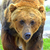 Bear habitat West Yellowstone