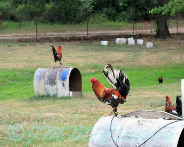 Fighting Cocks, as viewed from the road, near Beavers Bend State Park in Southeaster Oklahoma.