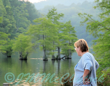 Pondering the Bald Cypress