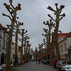 A side street with strange trees - Brugge