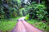 Road Thru Rain Forest To Sanctuary