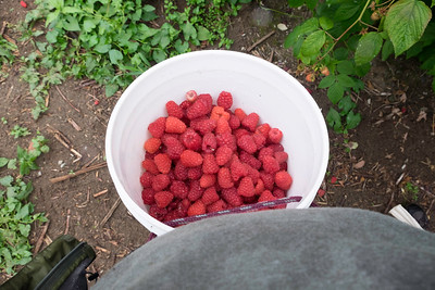 berries-070716-0090