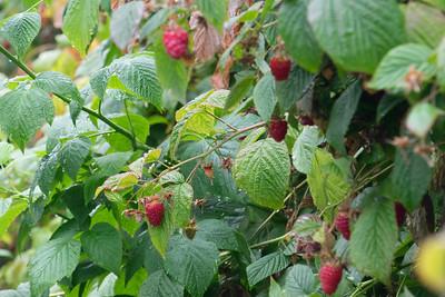 berries-070716-0074