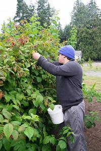 berries-070716-0079