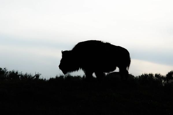 Best of Yellowstone & Grand Tetons