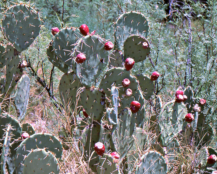 Catus plant in the area.