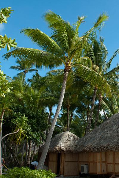 Bora Bora Pearl Resort Bora Bora Tahiti