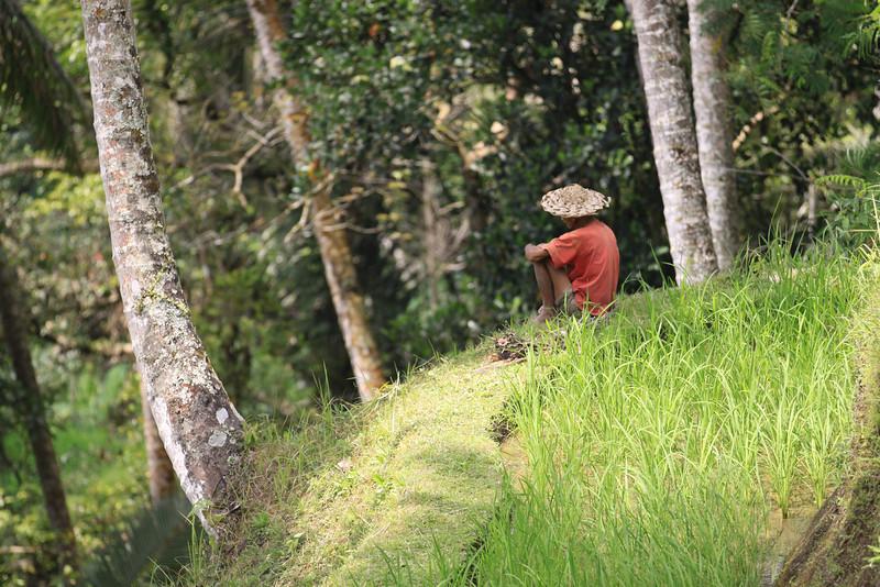 Tegallalang Rice Farmer