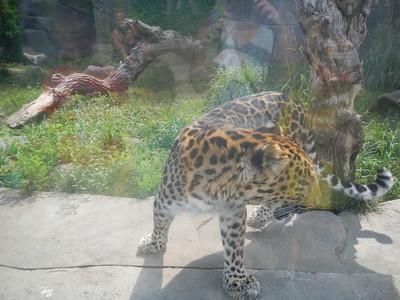 Brook Field Zoo Tina's Photos