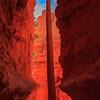 Navajo Trail - Bryce Canyon