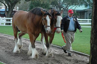 Busch Gardens Tampa 2-15-07