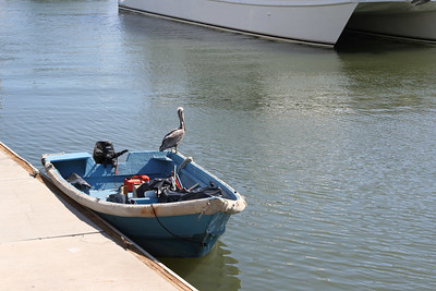 A pelican at the marina.