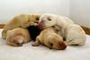 a dog pile