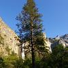 tree. falls.