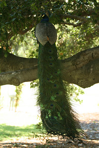 LA County Arboretum and Botanic Garden, Arcadia, CA.