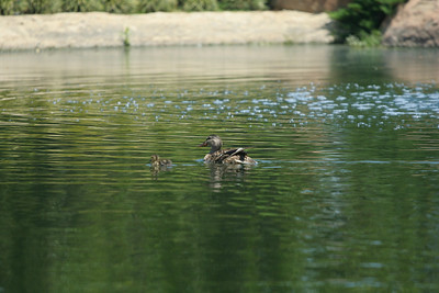 Japanese Gardens, Van Nuys, CA.