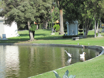 Hollywood Forever Cemetery, Hollywood, CA. There was an egret at the cemetery!  Fuck yeah!
