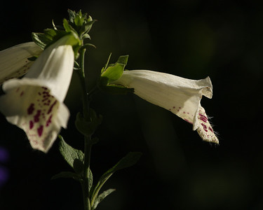 Descanso Gardens, La Canada, CA.