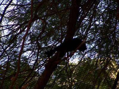 The Living Desert -- Birds in the aviary.