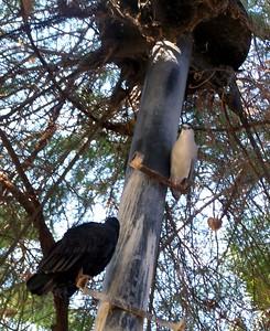 The Living Desert -- Birds in the aviaries.