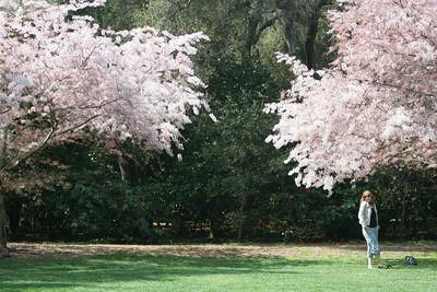 Descanso Gardens, La Cañada Flintridge, CA.