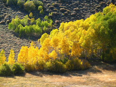 And more aspens.
