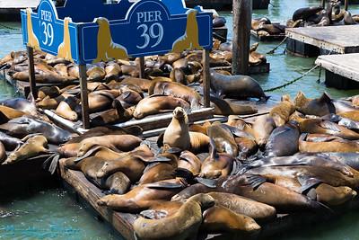 San Francisco Aquaruim