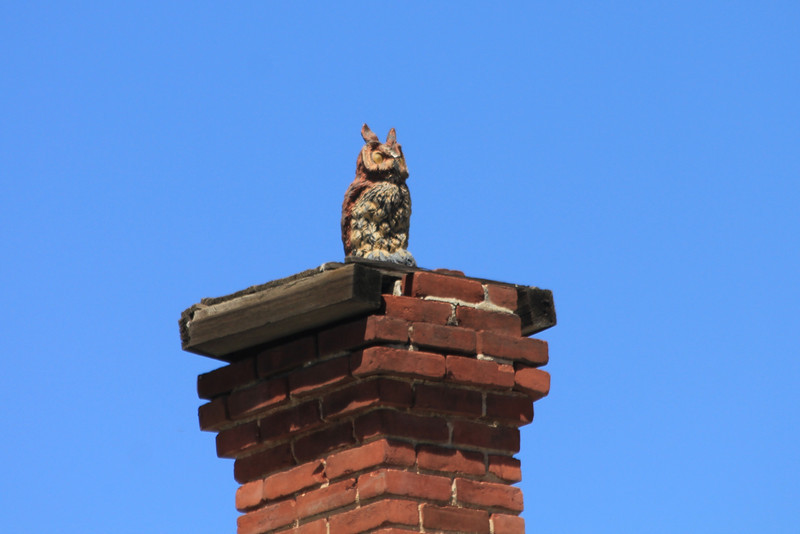June 25, 2012 (Near Redlands Bowl [South Eureka Street] / Redlands, San Bernardino County, California) -- Statue of Owl on chimney