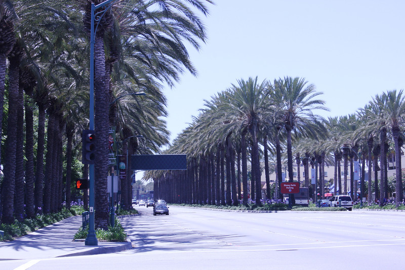 June 23, 2012 (Katella Avenue / Anaheim, Orange County, California) -- Palm lined road