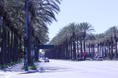 June 23, 2012 (Katella Avenue / Anaheim, Orange County, California) -- Palm lined road