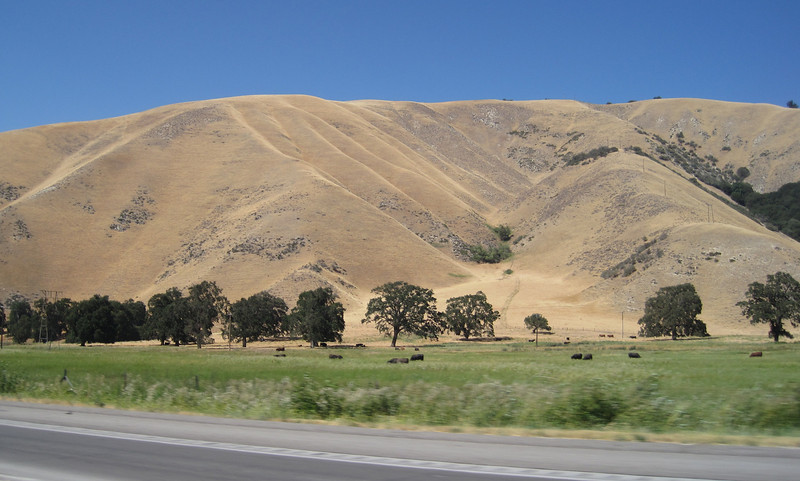 "June 27, 2012 (Highway 5 ""The Grapevine"" / Kern County, California) -- ""Golden California"" foothills"