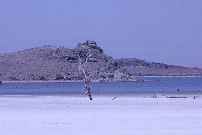 June 24, 2012 (Salton Sea / Niland, Imperial County, California) -- Red Hill behind dead tree on salt beach