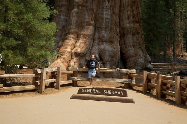 Sequoia NP (Sherman Grove)