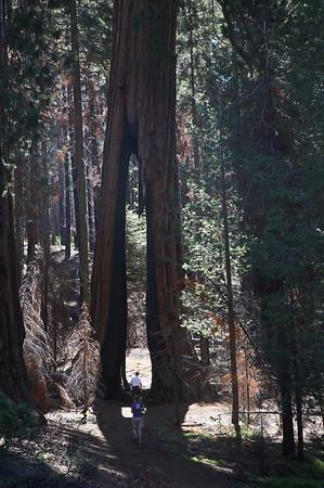 Yosemite Valley (Mariposa Grove)