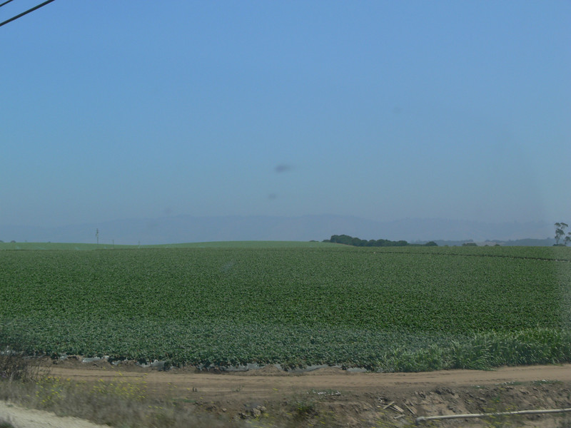 Artichoke fields in the Monterey Bay area.