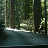 Just before we joined highway 101 again we saw the turn off for the Drive Through Tree and took this dirt road.