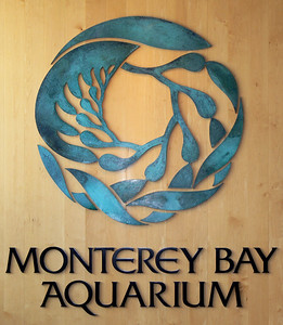 Monterey Bay Aquarium - July 21, 2008